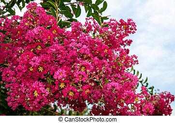pink oleander bush - pink oleander flower against blue sky