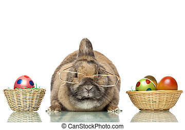 Cute Easter bunny sitting between baskets with Easter eggs -...