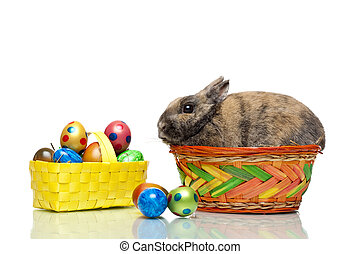 Easter bunny sitting in basket with Easter eggs