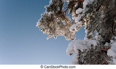 Camera rotates and removes the branch of a tree with snow and sky.