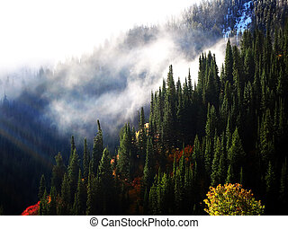 Forrest in Autumn with Mist and Sunlight