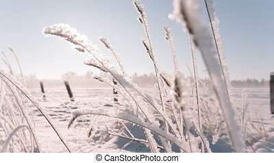 Camera moves from right to left removing the frozen grass in...