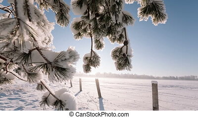 Camera moves from right to left and takes a winter landscape...