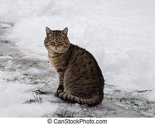Grey cat outdoors in winter