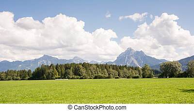 Pasture in Bavaria - Pasture in the Allgaeu Bavaria, Germany...