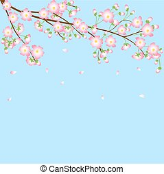background with cherry blossom branch - Spring blue...