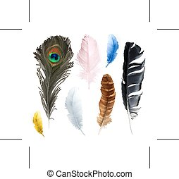 Feathers, vector icons - Set with feathers, vector icons,...
