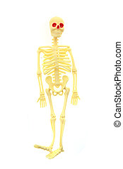 small human skeleton isolated on the white background