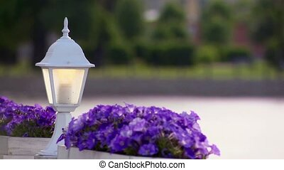 White flashlight and two flowerbed violets in summer day -...