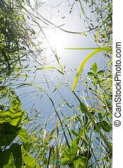 Gras von unten - grass from below with sun flares in the...