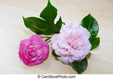 pink flowers on background