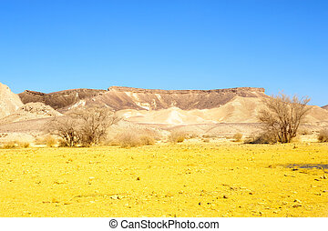 Negev Desert - Sand Hill In The Negev Desert, Israel.