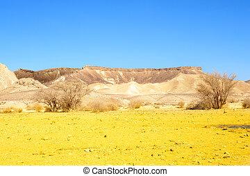 Negev Desert - Sand Hill In The Negev Desert, Israel.