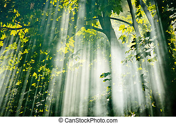 fairy sunlight in forest - beautiful sunlight filtering...