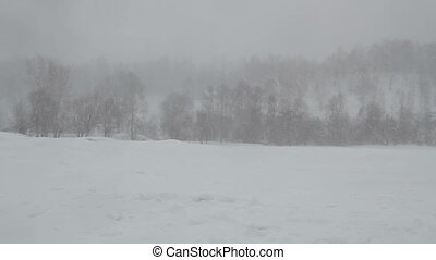 Blizzard - Heavy snowfall in the woods