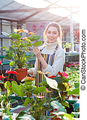 Smiling woman gardener holding flower pot with anthuriums in...