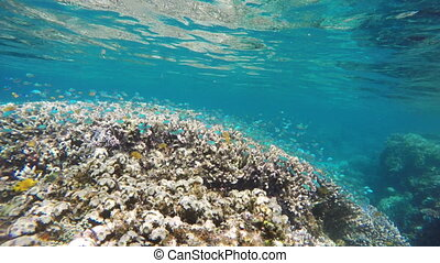Coral reef and tropical Fish. - Many reef fish in the...