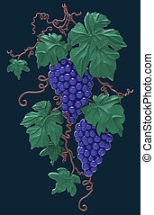 Grapes on a dark background isolated