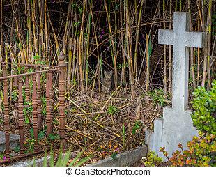 Feral Cat - feral cat in a graveyard
