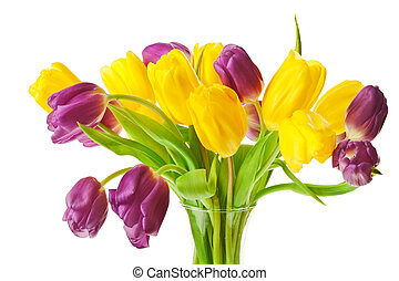 Purple and Yellow Spring Tulips Isolated
