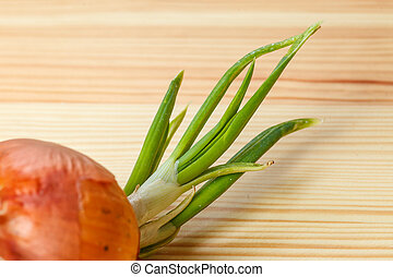 sprouting onion table wooden green