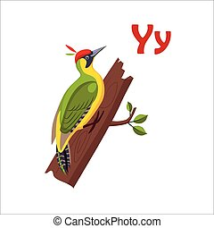 Yellow Wagtail Funny Alphabet, Animal Vector Illustration -...