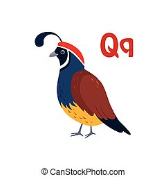 Quail. Funny Alphabet, Animal Vector Illustration