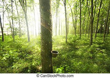 橡膠, 樹