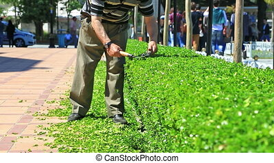 City street with gardener cutting bushes - Male worker...