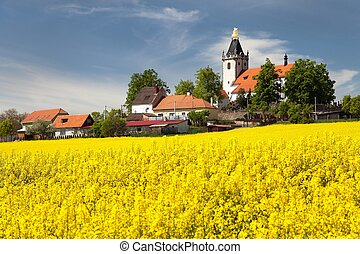 church and golden rapeseed field (brassica napus) plant for...