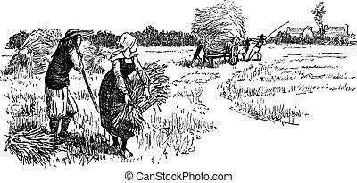 Harvest in Brittany, vintage engraving.