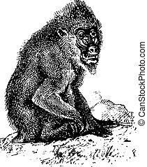 Mandrill or mandrill Mandrillus sphinx, vintage engraving -...