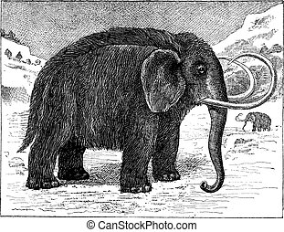 Mammoth or Mammuthus sp, vintage engraving - Mammoth or...
