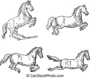 Classical Horse Dressage Movements, vintage engraving -...