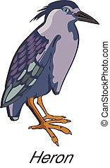 Night Heron or Nycticorax sp, illustration - Night Heron or...