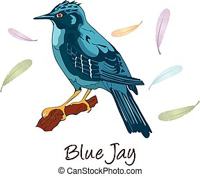 Blue Jay, Color Illustration - Blue Jay, Perched on a...