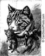 Cat with kitten, vintage engraving. - Cat with kitten,...