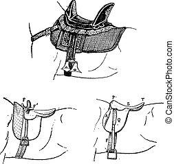 Arab saddle, Side saddle, English saddle, vintage engraving.