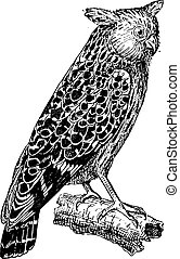 Bubo ketupu or Buffy fish owl, vintage engraving - Bubo...