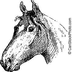 vintage engraving.