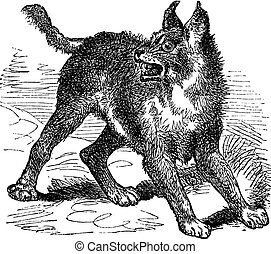 Caracal or Lynx vintage engraving - Caracal or Lynx or wild...