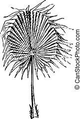 Palm Leaf, vintage engraving. - Palm Leaf, vintage engraved...