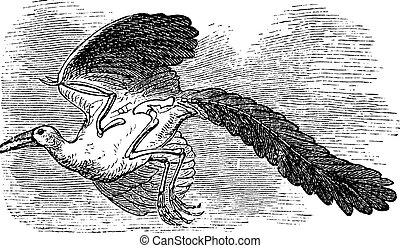 Archaeopteryx, Original bird or First bird vintage engraving...