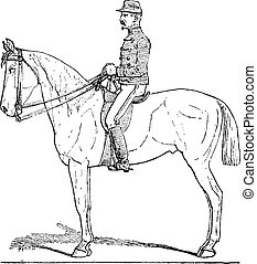 Position of the Cavalier, vintage engraving.