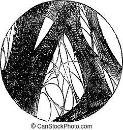 Coagulated fibrin vintage engraving