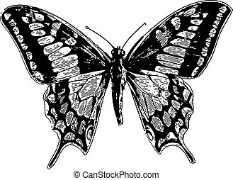 Old world swallowtail or papilio machaon - Old engraved...