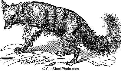 Aardwolf or Proteles cristatus vintage engraving - Aardwolf...