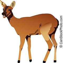 Deer - Vectorized illustration of a deer.