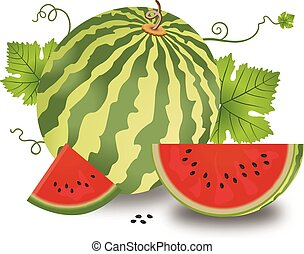 Watermelon, illustration - Watermelon, Fruit, Whole and...