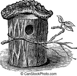 Parakeet Nest made of Hollow Tree Trunk, vintage engraving